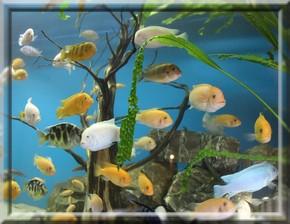 obri_akvaria_0006